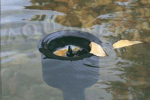 Kerti tó webáruház - OASE AquaSkim álló szkimmer