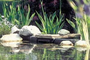 Kerti tó webáruház - OASE Biosys oldal szkimmer